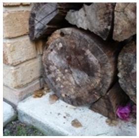 Termite control - termites on wood