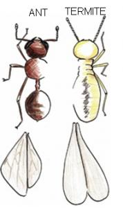 Termite Control - ant-vs-termite