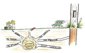 termite control - colony-diagram