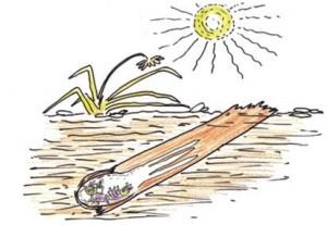 termite control - colony-diagram