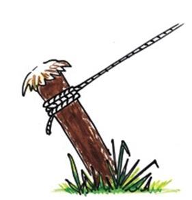 Termite Control - Tent Pole
