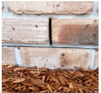 Termite Control - Termites Outside