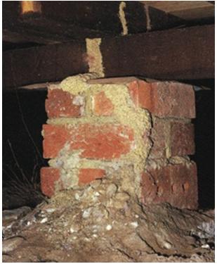 Termite Control - Termites Foundation
