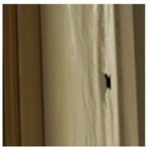 Termite Research - Making a hole in affected timber