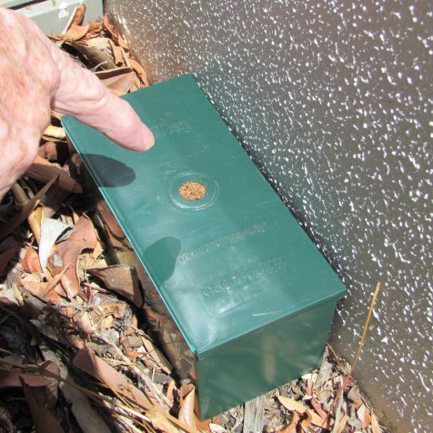 This is a DIY Trap was placed on a garden against a wall. The hole in the lid has been filled with termite 'mud' mixture to prevent loss of humidity and to exclude ants. The blocked hole is the signal to tell you they've arrived and to begin the baiting process.